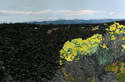 Newberry Lava Flow